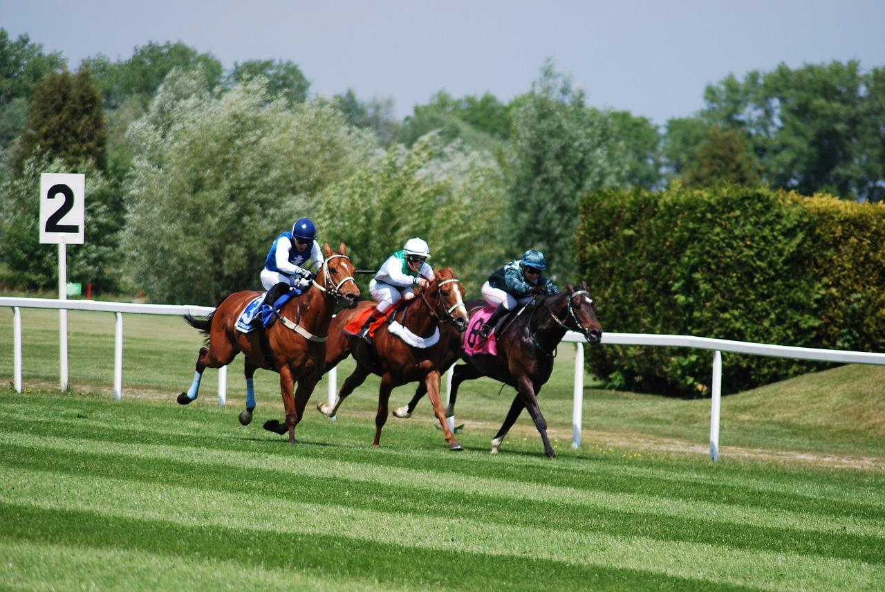 Comment reconnaître un cheval gagnant ?
